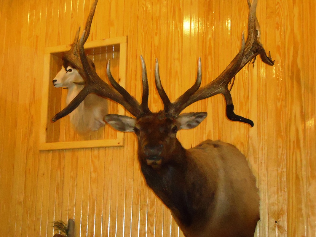 Hooks and Horns Taxidermy Premier Taxidermist, Humble, TX - Home